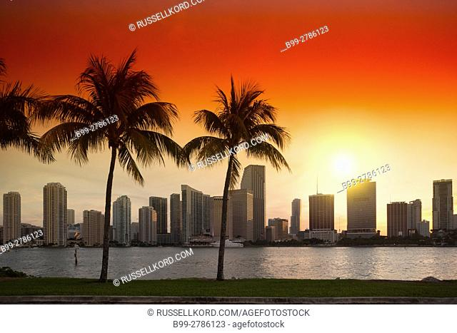 PALM TREES WATSON ISLAND DOWNTOWN SKYLINE BISCAYNE BAY MIAMI FLORIDA USA