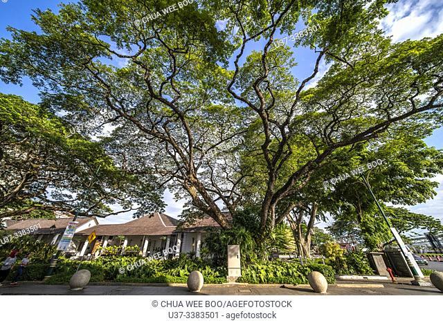 A big tree beside the old Kuching High Court, Sarawak, Malaysian Borneo, Malaysia, Southeast Asia, Asia