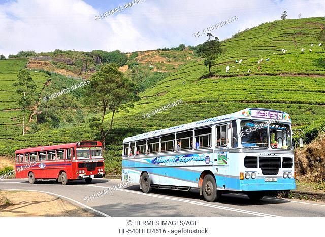 Sri Lanka, Nuwara Eliya, local bus