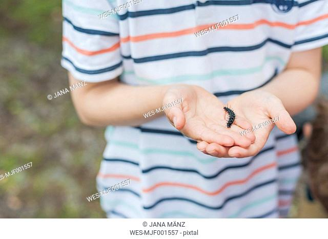 Germany, Little boy looking at caterpillar of peackock butterfly