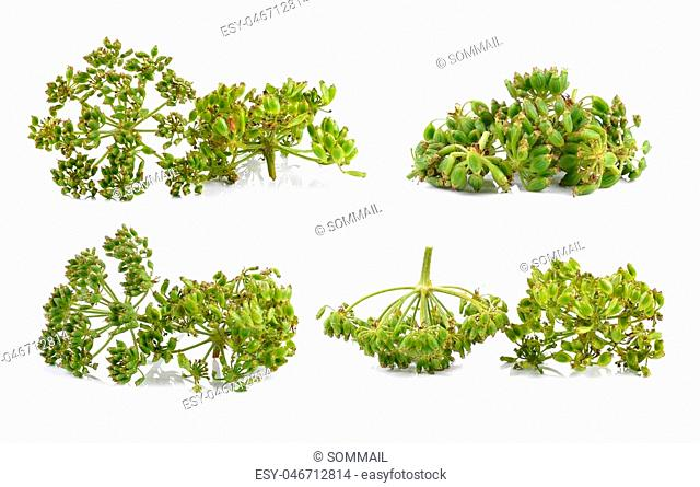 fresh dill seeds on white background