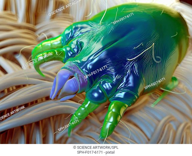Dust mite on fabric, illustration
