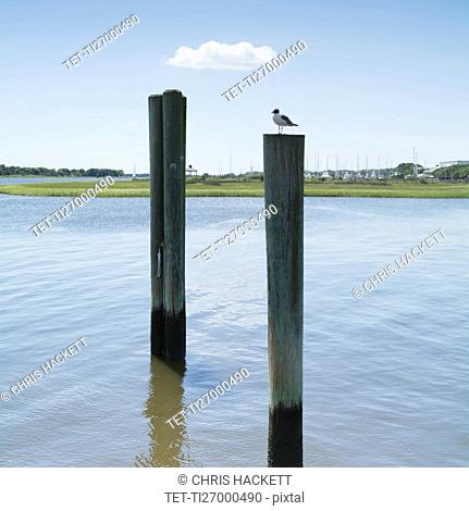 USA, North Carolina, Southport, Bird sitting on wooden post