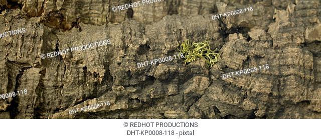 Wood - Tree Bark