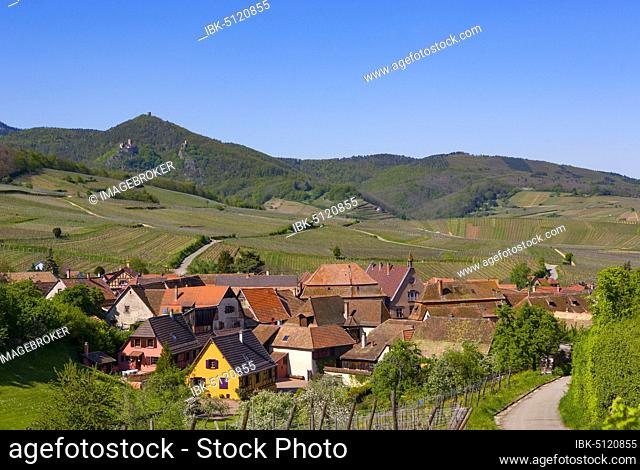 Wine-growing region in the Alsace Wine Route, Hunawihr, Alsace, France, Europe