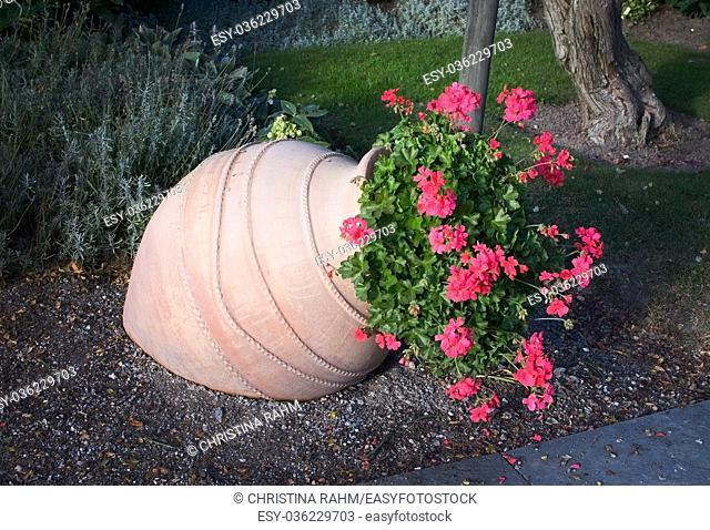 Pink geranium flowers in terracotta vase outdoors