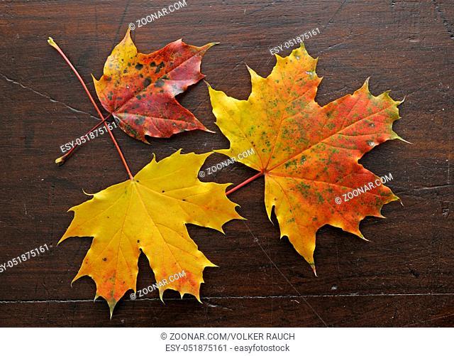 Herbst, blatt, blätter, ahornblatt, ahorn, laub, herbstlaub, bunt, farbe, oktober, gelb, orange, rot, braun, natur, jahreszeit