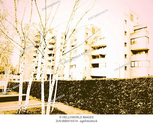 Silver birch trees and hedge in front of apartment blocks on South Bank, London, England, Europe