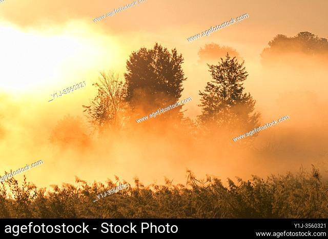 Trees on early morning mist at sunrise, Hesse, Germany, Europe