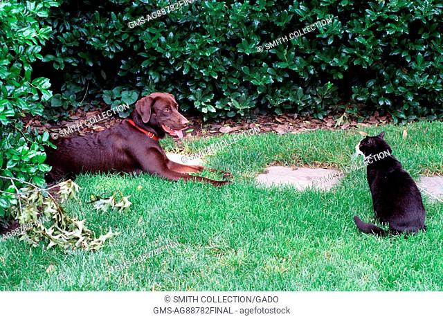 Socks the Cat and Buddy the Dog, First Family pets, sitting on the south lawn of the White Hous, June 6, 1998. Image courtesy National Archives