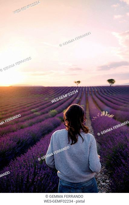France, Valensole, back view of woman standing in front of lavender field enjoying sunset