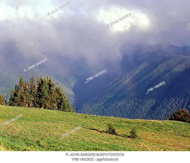 Rainstorm over coniferous forest, view south from Hurricane Ridge towards Elwah Valley, Olympic National Park, Washington, USA