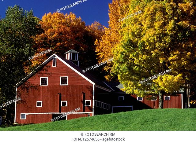 Vermont, barn, fall, foliage, Colorful maple trees surround a red barn in Peacham in the fall