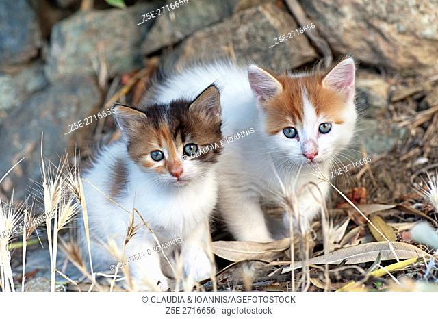 Two kittens sitting outdoors side by side and looking at camera