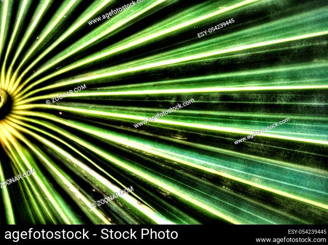 A horizontal view of a macro close up view of a beautifully structured green leaf
