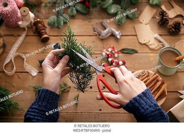 Woman's hands cutting twig for decorating Christmas present