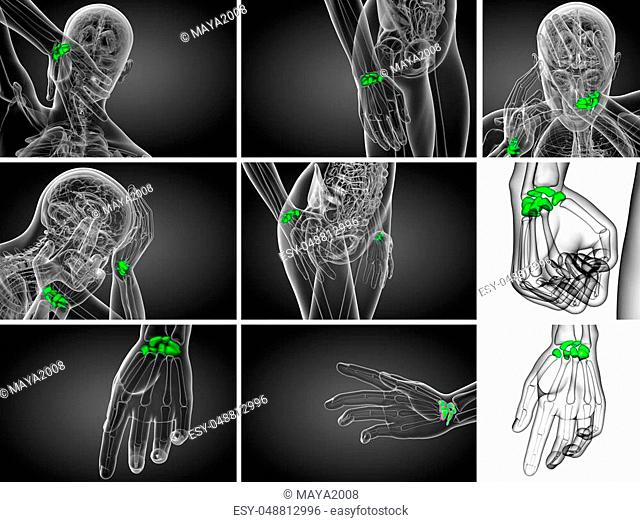 Proximal skeletal hand Stock Photos and Images | age fotostock