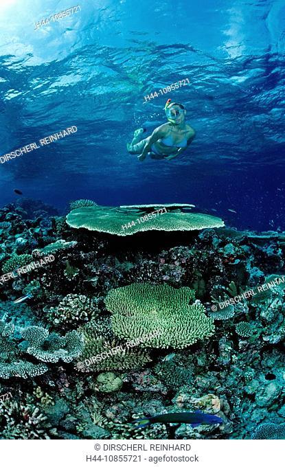 10855721, Maldives, Indian Ocean, Meemu Atoll, sno