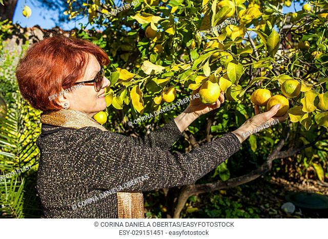 Woman picking lemons from the tree in the garden