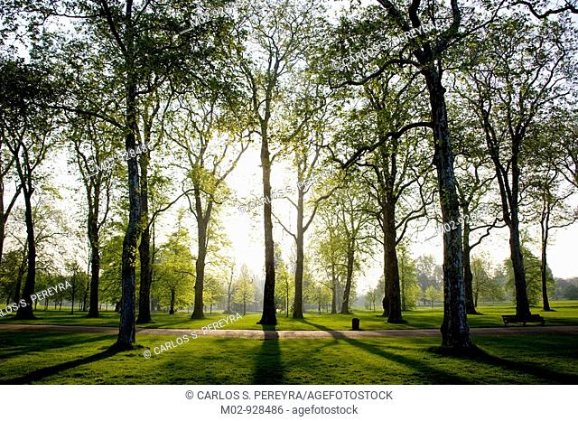 Hyde Park in the morning, London, Great Bretain, UK