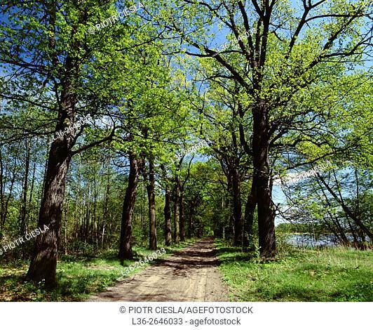 Landscape Park Stawy Milickie. Poland