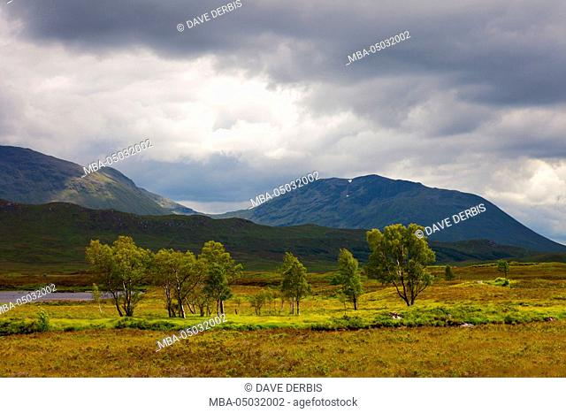 Trees, light, Rannoch moor, mountains, Meall Buidhe, highlands, summer, Scotland