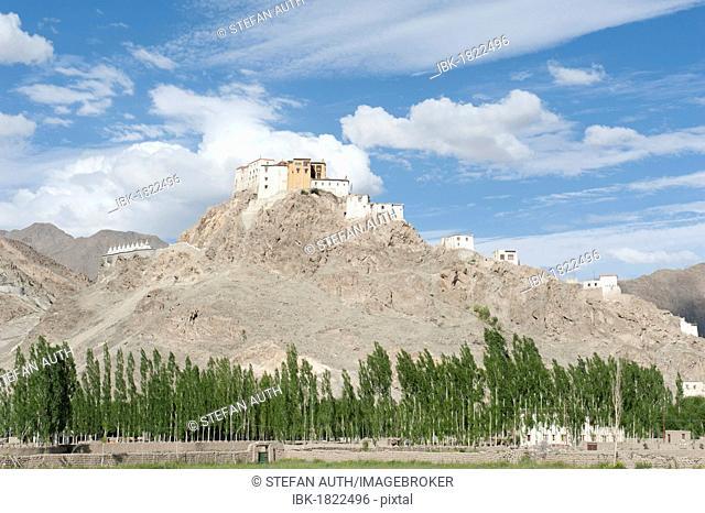 Tibetan Buddhist monastery on a hill, Thikse Monastery near Leh, a row of poplars, Ladakh region, Jammu and Kashmir, India, South Asia, Asia
