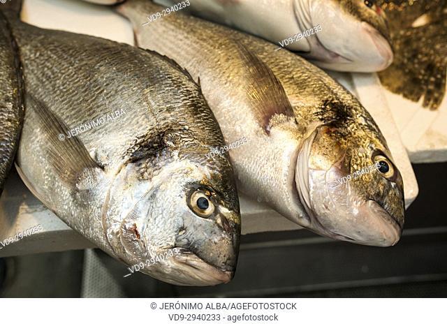 Sea breams at a fish market. Mercado Atarazanas, spanish market Malaga city, Costa del Sol, Andalusia southern Spain, Europe