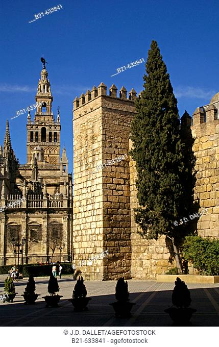 Cathedral, the Giralda tower and the walls of the 'Reales Alcazares' at Seville. Andalucia. Spain