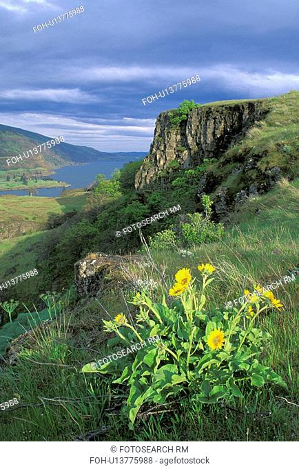 state, columbia, mayer, gorge, river, balsamroot