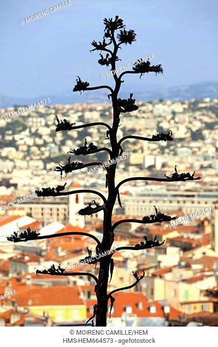 France, Alpes Maritimes, Nice, the old town from the castle hill, Agave americana Marginata in the foreground