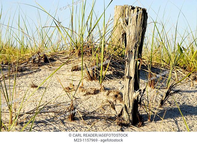 A closeup of old wood on dunes, Long Beach Island, New Jersey, USA