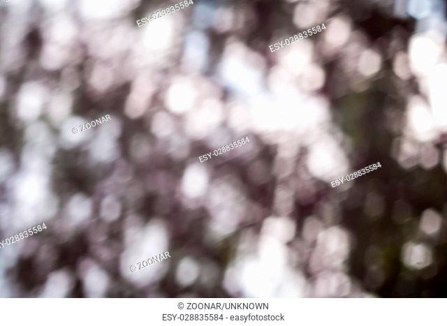Beautiful nature bokeh soft color background photographed in forest