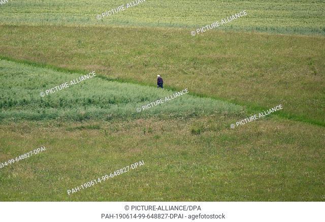 14 June 2019, Baden-Wuerttemberg, Ravenstein: A walker walks along a dirt road. Photo: Fabian Sommer/dpa. - Ravenstein/Baden-Wuerttemberg/Germany