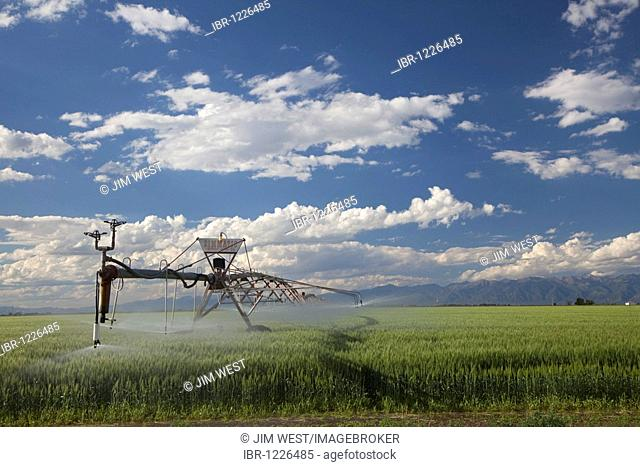 A center-pivot irrigation system waters a crop in the high desert of the San Luis Valley, Alamosa, Colorado, USA