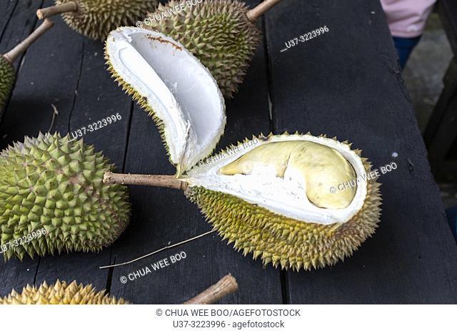 Eating durians in Siniawan old town, Sarawak, Malaysia