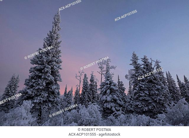 Dawn begins to light up the sky over the boreal forest surrounding Beaver Creek, Yukon Territory, Canada