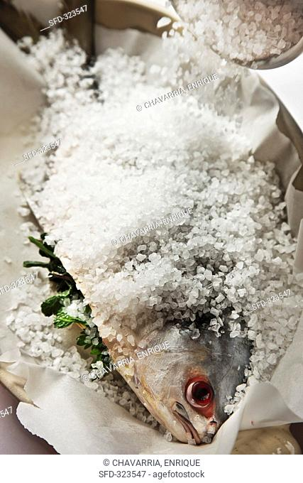 Pompano Jack fish being prepared for a salt crust