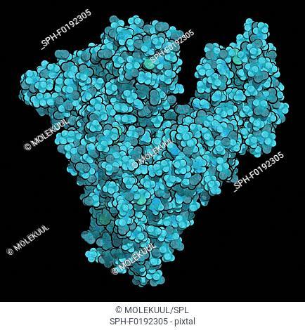 Human serum albumin molecule, illustration