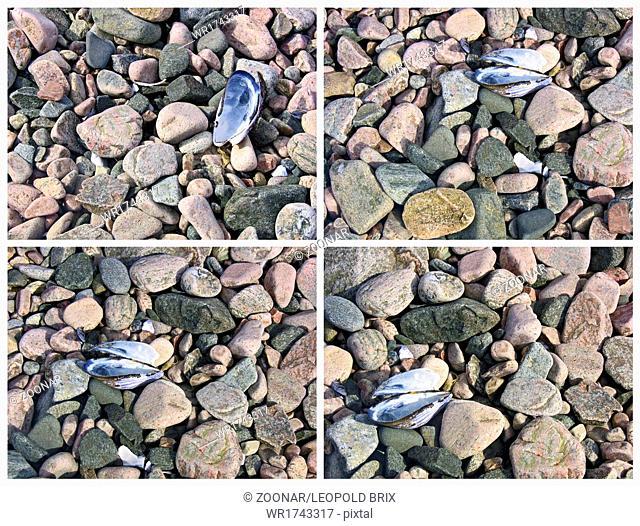 pink granite rocks and sea shells