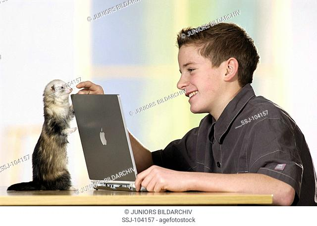 boy with domestic polecat at a laptop / Nymphicus hollandicus