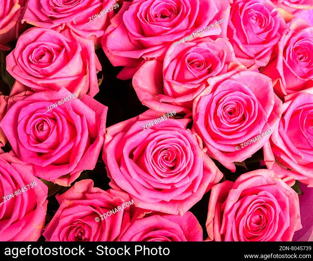 Abstract background texture of flowers. Close-up