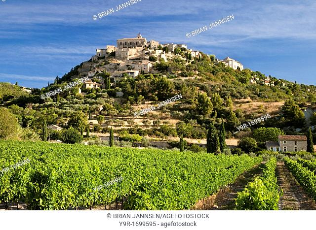 Early morning in a vineyard below Gordes, Provence France