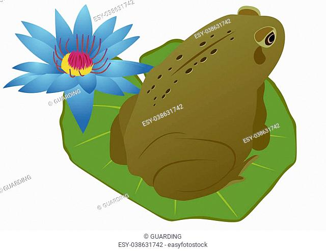 Green frog sitting on a sheet near the lotus flower