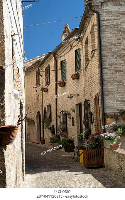 Corinaldo (Ancona, Marches, Italy): the historic town at morning. Street with plants and flowers