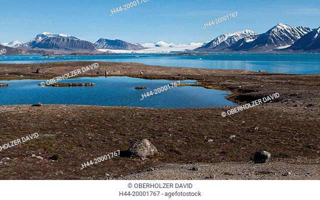 Spitsbergen, Svalbard, Kongsfjord, Blomstrandhalvoya, tundra