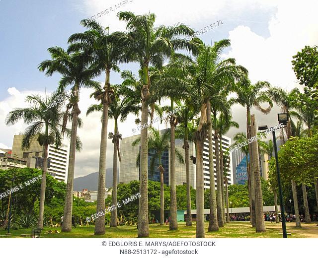 Francisco de Miranda Avenue view from Parque del Este, Caracas, Venezuela