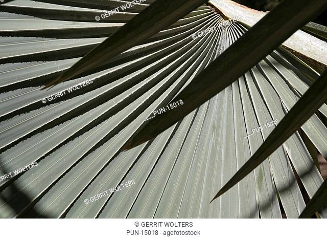 Mathematics in nature are shown by this palm leaf in a botanic garden in Marrakech, Morocco