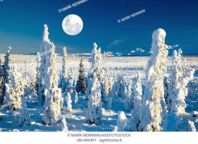 Hoarfrost on trees, east of Matanuska Glacier, Alaska, USA
