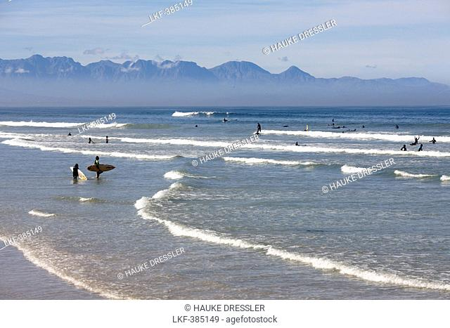 View of surfers on the beach, Muizenberg, Peninsula, Cape Town, South Africa, Africa